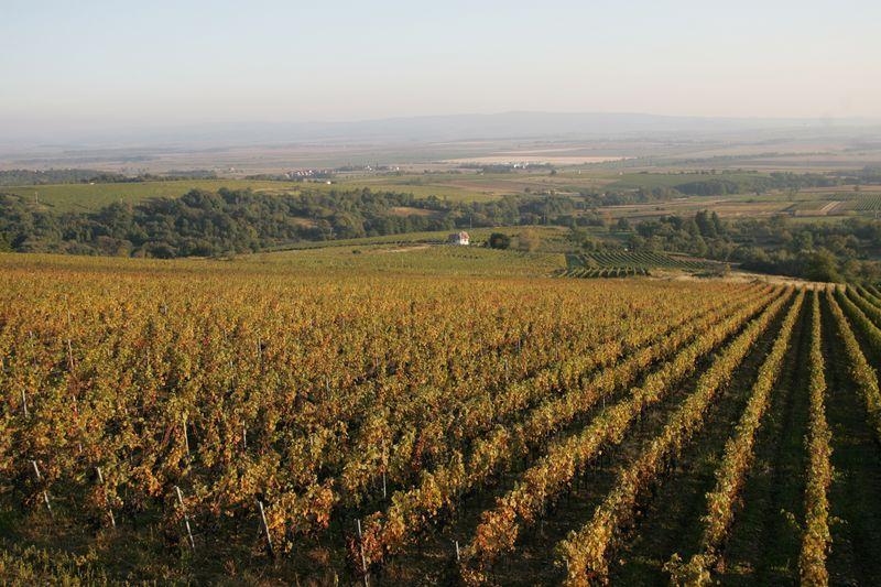 Wijngaarden van Enjingi