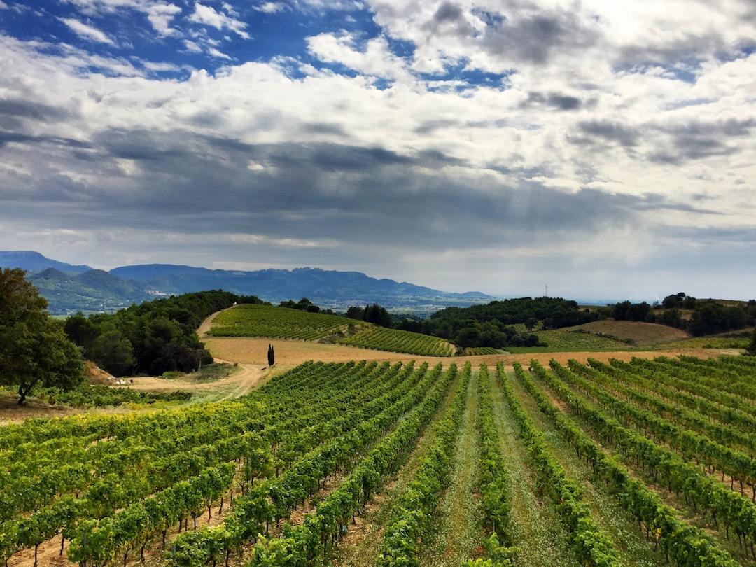 wijngaarden Escaravailles