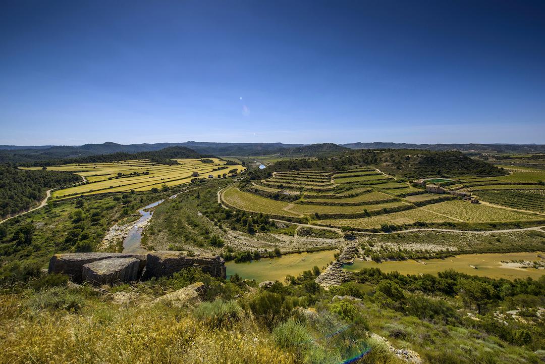 wijngaarden, Torres