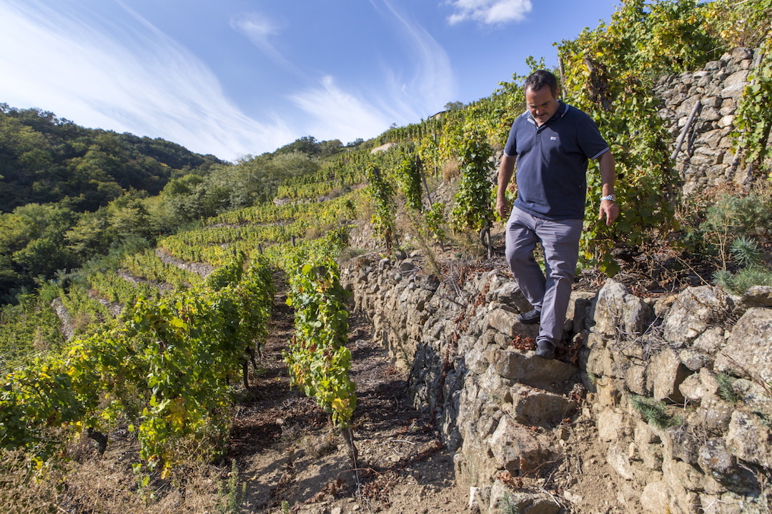 Yves Cuilleron in de wijngaard