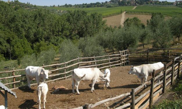 Vigna del Sorbo Riserva, Fontodi, Chianti Classico, Italië 1993