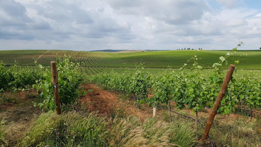 Margaca Vinhos